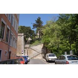 Montée du Mont Sauvage