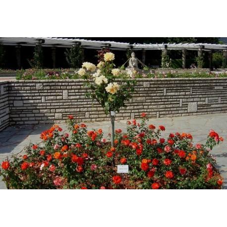 La roseraie du Parc