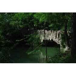 Les ponts du parc