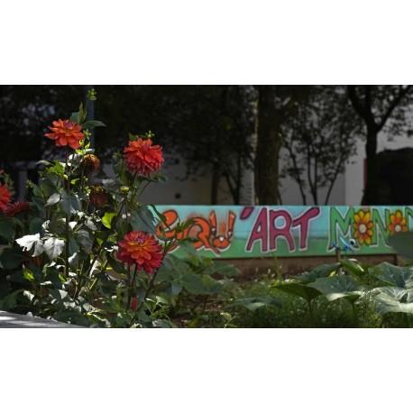 En août le jardin a gagné une plaque, des fresques et les roses sont en fleur
