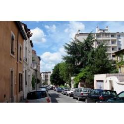 Rue Bournes