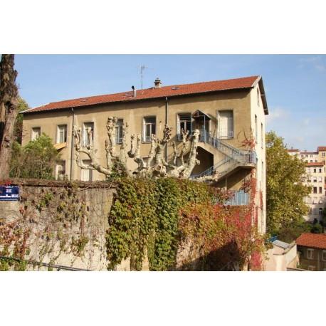 Rue Professeur Maurice Vallas