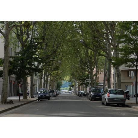 Cours Bayard