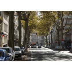 Avenue de Saxe