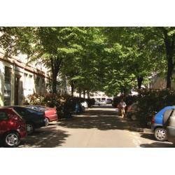 Rue François Garcin