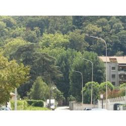 Rue du Bois de la Caille