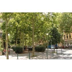 Place des Tapis