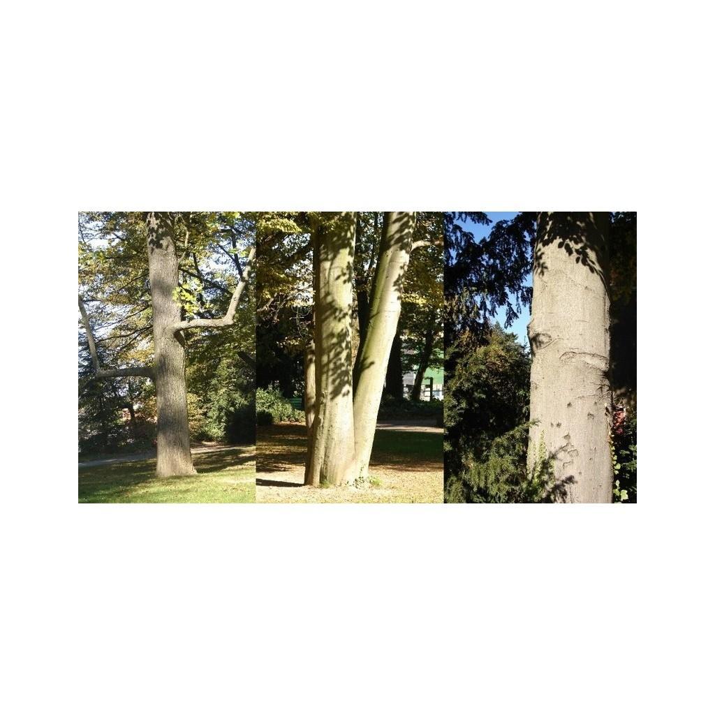 Jardin public de champvert les rues de lyon for Jardin public