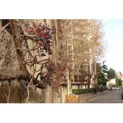 Petite rue de la Viabert