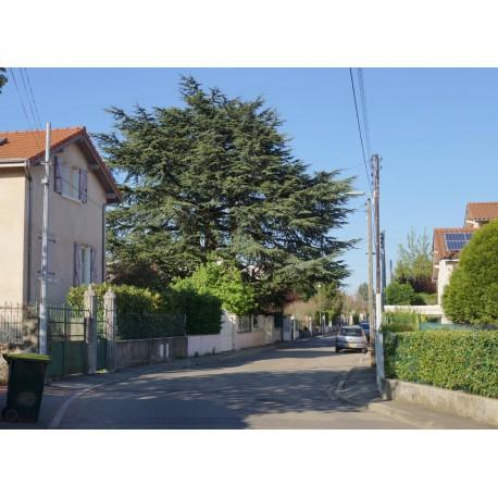Rue J L Vincent