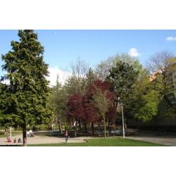 Jardin Sisley
