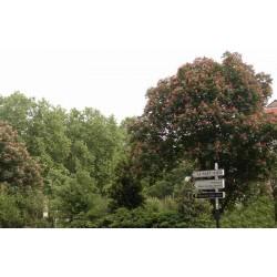 Jardin Général Charles Delestraint