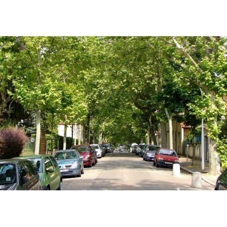 Avenue Esquirol