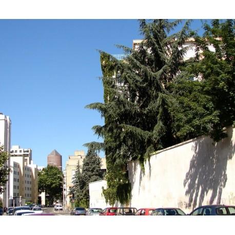 Rue Saint Victorien