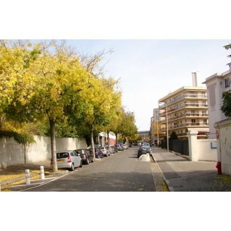 Rue du docteur Crestin