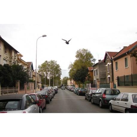 Rue Emile Combes