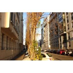 Rue Saint Lazare