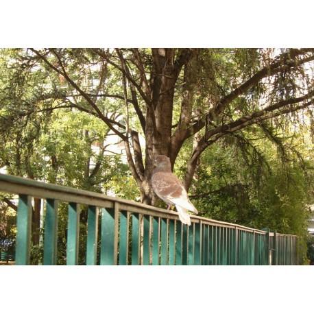 Jardin Renard
