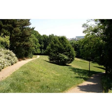 Jardin de Saint Rambert