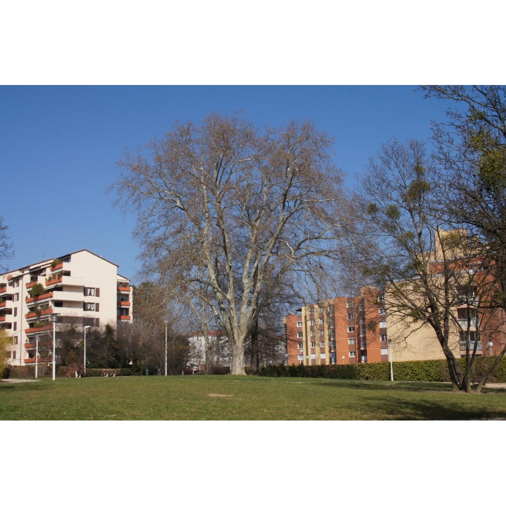 Parc du plateau de saint rambert les rues de lyon for Parc du jard saint dizier
