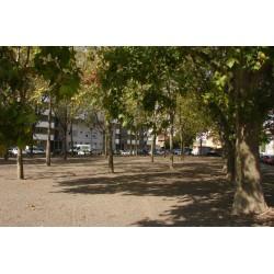 Place des Combattants en Algérie Maroc Tunisie