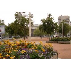 Place du Bachut
