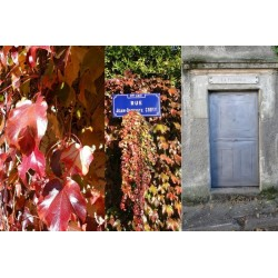 Rue Jean Baptiste Couty