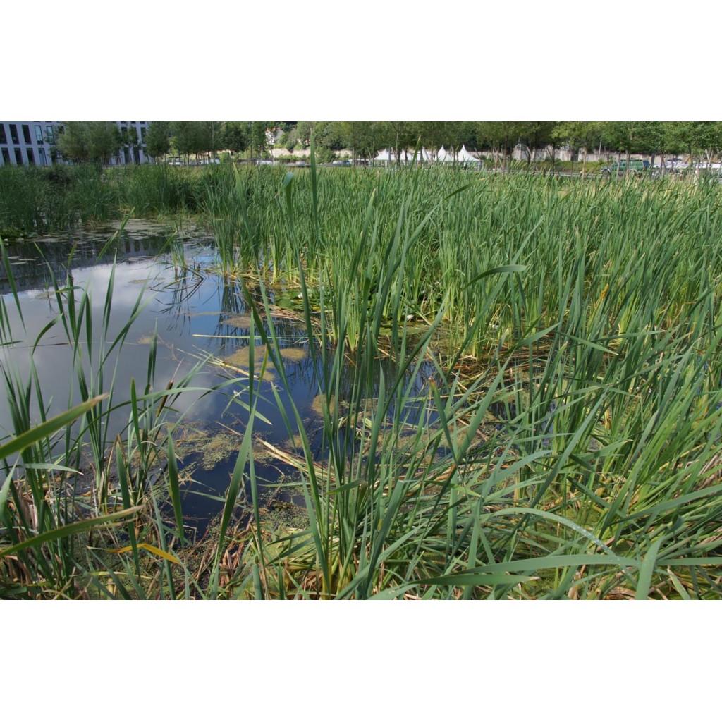 Jardin aquatique jean couty les rues de lyon for Jardin aquatique