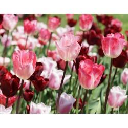 Les fleurs du parc